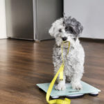 dog and measuring tape